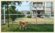 快樂狗寵物旅館簡介圖