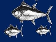 【屏東黑鮪魚文化觀光季】