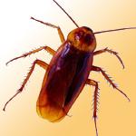 蟑螂防治工程