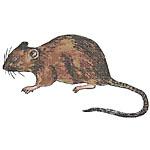 老鼠防治工程