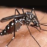 蚊蟲防治工程