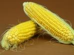 有機蔬菜 - 玉米